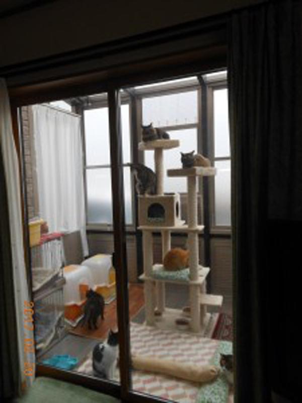 8匹の猫達のマイハウスを作りました!!